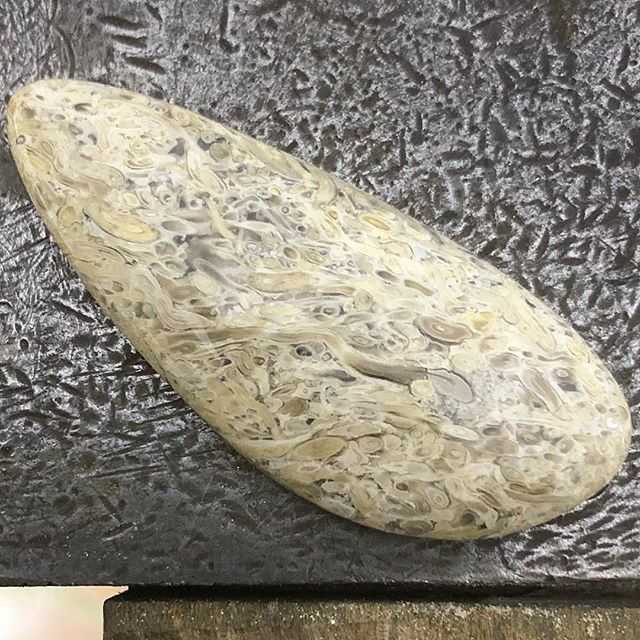 How's this interesting stuff! Fossilised fern root or Adventitious roots found along Lune River in Southern Tasmania by Ross Jones. It's about a 180 odd million years old!